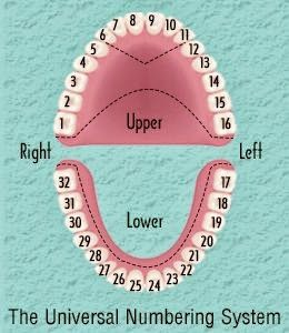 Decoding dental numbering system